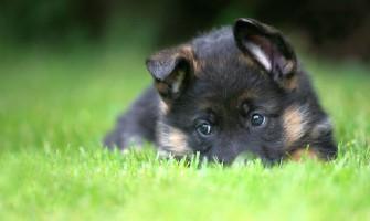 Kam reikalingi šunys asistentai?