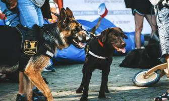 Pirmieji šunys asistentai Lietuvoje