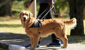 Turėti šunį pagalbininką Lietuvoje – vis dar didžiulis iššūkis