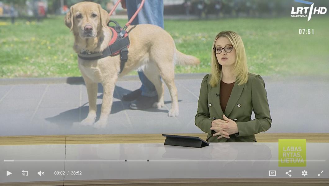 Naujovė Lietuvoje: pradedami rengti šunys vedliai neįgaliesiems